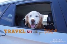 Road Trip Safety With Your Dog + Infographic