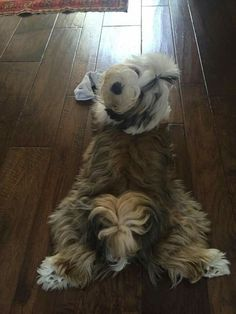7 month old Tibetan Terrier pup Havanese Puppies, Dogs And Puppies, Doggies, I Love Dogs, Cute Dogs, Tibet Terrier, Baby Animals, Cute Animals, Bearded Collie