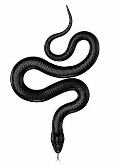 Illustration about Black snake with green eyes isolated on white. Illustration of reptile, squama, serpent - 50938478 Finger Tattoos, Leg Tattoos, Black Tattoos, Body Art Tattoos, Small Tattoos, Sleeve Tattoos, Tatoos, Tatoo Snake, Black Snake Tattoo