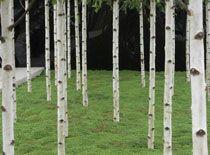 small garden trees