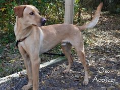UPDATE! Happy Update! Oso was adopted 12-23-14! He's going to have a Merry Christmas, for sure! :-) (Posted 12-24-14)
