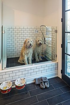 Dogs in mudroom
