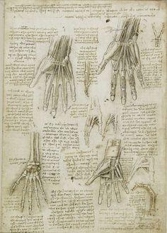 scheletro e muscoli della mano, Leonardo
