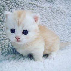 So Cute 😍😍