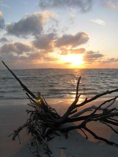 Sanibel Island, Florida, Shelling Tips   USA Today