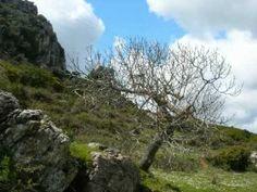Caminito mountain walk between eagles and peonies