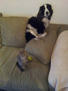 This dog who doesn't need to be told twice. | Community Post: 37 Dogs Who Are Totally Freaked Out