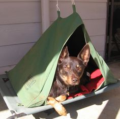 MAXIE SWAGS portable canvas dog kennels. Great for camping, at home and for sleepovers.