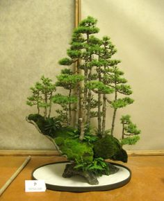 Bonsai tree forest grouping in elevated slab