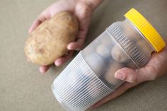 How to Plant Potatoes: 5 steps - wikiHow. gathering potato seeds
