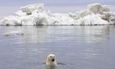 Forty percent. That's the stunning population loss for polar bears in the southern Beaufort Sea. The news comes from a new study linking the dramatic decline in this polar bear subpopulation in northeast Alaska and Canada to a loss of sea ice due to climate change. Read on to learn more....