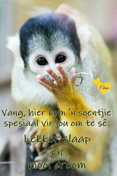 Good Night Messages, Good Night Quotes, Morning Messages, Good Night Sleep Tight, Afrikaanse Quotes, Goeie Nag, Goeie More, Night Wishes, Special Quotes