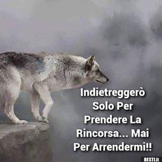 """the-smiling-wolf: """"😊🐺💖 """" Wolf Spirit, Spirit Animal, Beautiful Wolves, Animals Beautiful, Husky, Business Coach, Wolf Stuff, Wolf Love, She Wolf"""