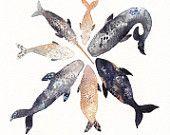 Whale Pod - Archival Print via etsy