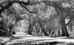 O.C. History Roundup: Irvine Park / Orange County Park