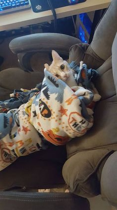 Made myself a purrito this morning. She was a bit spicy and had a lot of bite! http://ift.tt/2kOGUix