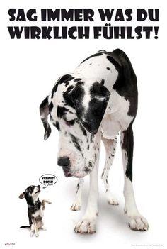 Empire 394897 Hunde - Sag immer was du denkst Poster - 61 x 91.5 cm