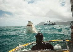 This is why I'm not sure I can get in the cage! Cage Shark Diving in Cape Town, South Africa... id pee myself if this happened lol
