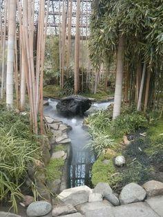 bambus im garten pflanzen-immergrün, robust und pflegeleicht, Garten und erstellen