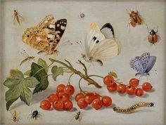 Jan van Kessel still life