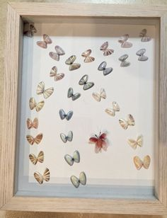 Coquina Shell - framed Butterfly art piece. Hand crafted tropical framed art.