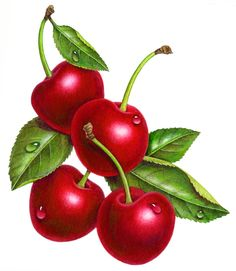 Cherries Four