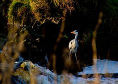 Heron on the Owveg River  Photo by Donie Roche -- National Geographic Your Shot