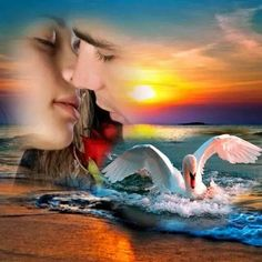 - The social network for meeting new people Meeting New People, Cover Art, Romance, Photoshop, Community, Outdoor Decor, Artwork, Beautiful, Sweet