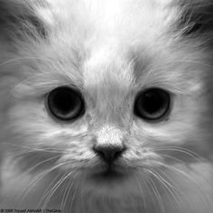 """""""A kitten is the rosebud in the garden of the animal kingdom."""" --Robert Southey"""