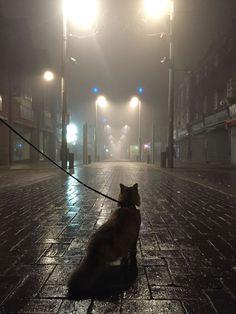 A cat in London - Imgur