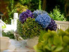 Far Above Rubies: Aunt Jody's Hydrangeas...
