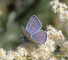 1000 Images About Garden Plants On Pinterest David