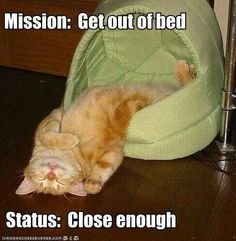Invasion of the Kitteh Snatchers! - LOLcats is the best place to find and submit funny cat memes and other silly cat materials to share with the world. We find the funny cats that make you LOL so that you don't have to. Funny Animal Memes, Animal Quotes, Cute Funny Animals, Funny Animal Pictures, Funny Cute, Cute Cats, Funny Kitties, Funny Jokes, Funny Pics