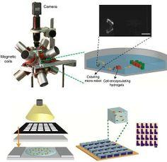 Nanomontagem robótica mostra futuro das biofábricas