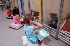 Si hay algo que echan de menos los perros en un refugio para animales -además de la libertad, por supuesto- es el cariño de las personas. Tienen que vivir en pequeños cubículos y se deben contentar con las caricias que puedan caerles de sus cuidadores, que tienen que 'repartir' su amor entre un numeroso