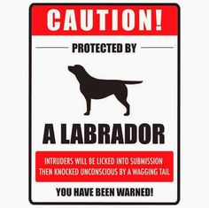Funny Labrador Dog Sign | Funny Joke Pictures