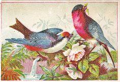 BEAUTIFUL VINTAGE BIRDS graphic