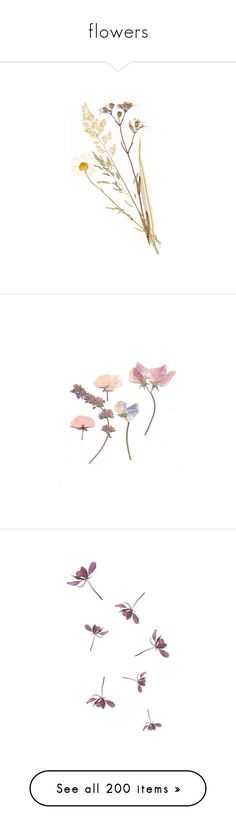 """""""flowers"""" by randomn3ss ❤ liked on Polyvore featuring home, home decor, floral decor, fillers, flowers, plants, decoration, nature, backgrounds and text"""