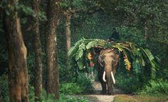Chitwan, Nepal 8th wonder