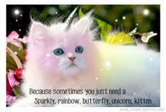 rainbow butterfly kitty | Because You Need a Sparkly, Rainbow, Butterfly, Unicorn Kitten