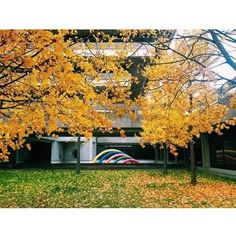 Thank you to the community for sharing your amazing pictures. This beauty comes from community member York University, School Photography, Fall Pictures, Photo S, Community, Autumn, Amazing, Instagram Posts, Plants