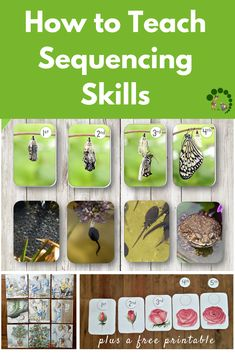 How to Teach Sequencing Skills to Children Plus a Free Printable - Montessori Nature