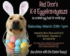 There are many great activities on tap in Chicago to support animal rescue - from TNR to Easter-focused festivities.