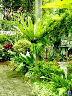 Tropical Garden Inspiration - loving ! the use of various ferns here.