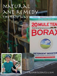 Natural remedy for ants in the home, kitchen, lawn, or garden