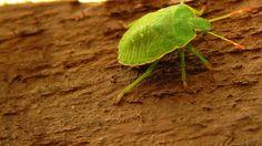 10 aprócska lény, ami mind megbújhat a lakásodban - Otthon Insects, Mindfulness, Consciousness