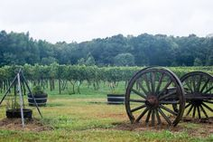 Stafford's Hartwood Winery takes visitors back to the roots of Virginia Wine