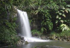Curtis Falls at Mt Tamborine