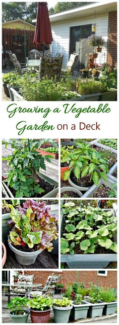 Plants, Projects, and Recipes for Growing Food in Your Urban Home