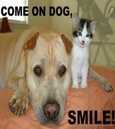 Funny Come On Dog Smile